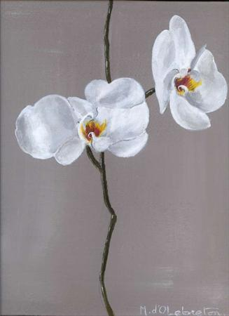 Photo: orchidée blanche - Copie (2).jpg