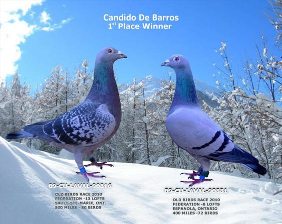 Photo: Candido de Barros